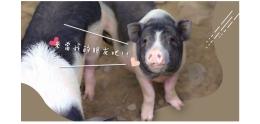 豬豬_工作區域 1.jpg